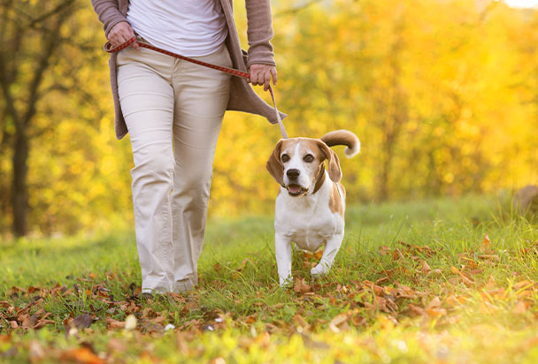 dog-walking-in-woodland-thumbnail.jpg