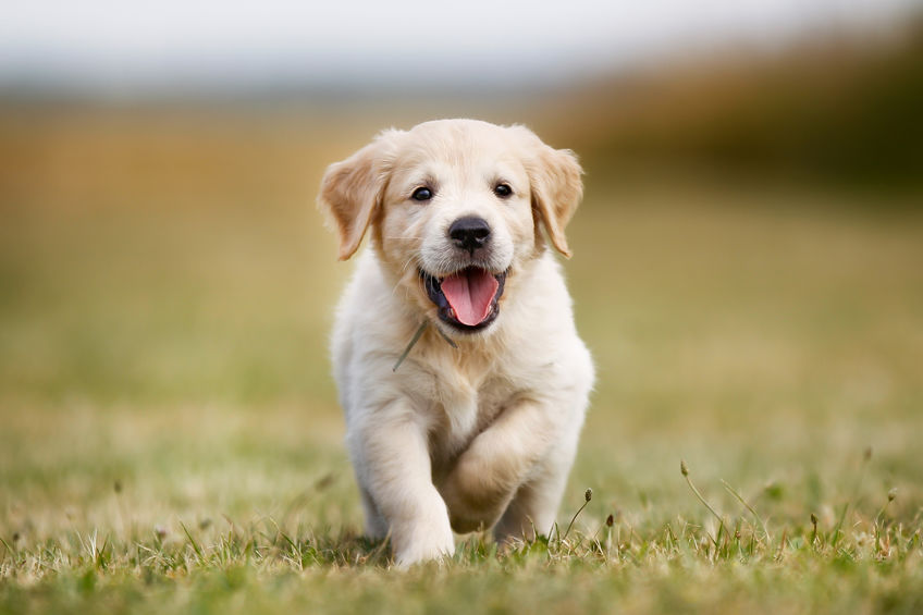 cute-puppy-visits.jpg