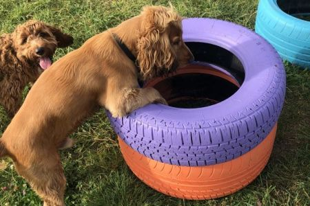 Four Legged Friends Petcare - dogs playing with coloured tyres.jpg