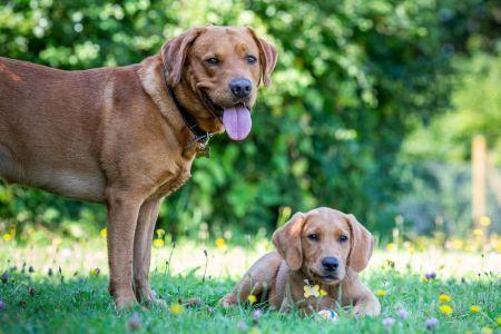 Four Legged Friends Petcare - big dog little dog.jpg