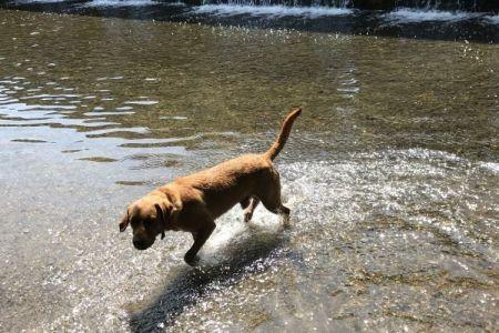 Four Legged Friends Petcare - dog at waters edge.jpg