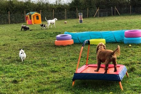 Four Legged Friends Petcare - doggy day care.jpg