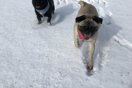 Four Legged Friends Petcare - 2 happy dogs in the snow.jpg