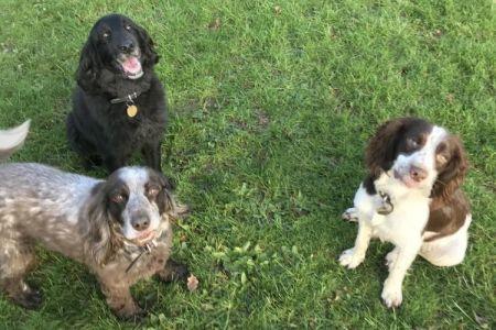 Four Legged Friends Petcare - 3 happy dogs in a field.jpg