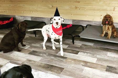 Four Legged Friends Petcare - happy birthday doggo.jpg