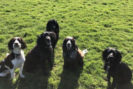 Four Legged Friends Petcare - 5 little dogs.jpg