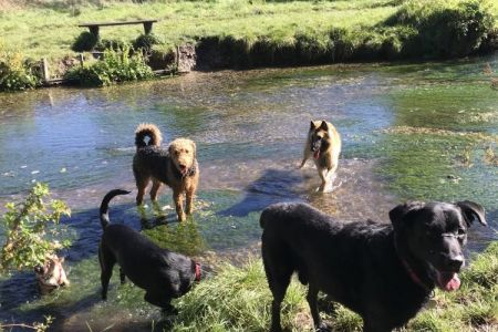 Four Legged Friends Petcare - group of dogs in stream.jpg