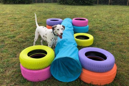 Four Legged Friends Petcare - dog at daycare with tunnel and tyres.jpg