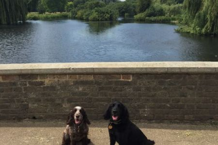 Four Legged Friends Petcare - two dogs by lake.jpg