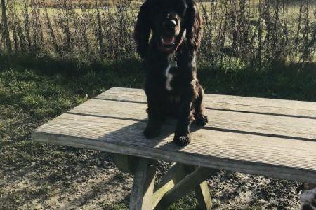 Four Legged Friends Petcare - dog on picnic table.jpg