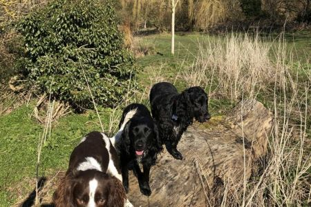 Four Legged Friends Petcare - happy dogs on country walk.jpg