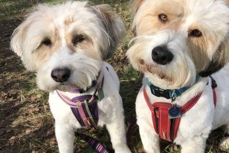 Four Legged Friends Petcare - double trouble pups.jpg