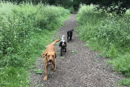 Four Legged Friends Petcare - two dogs on country path.jpg