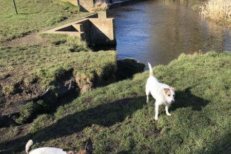 Four Legged Friends Petcare - 2 small dogs by bridge.jpg