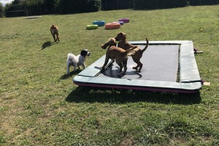 Four Legged Friends Petcare - happy dogs on trampoline.jpg