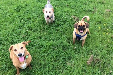 Four Legged Friends Petcare - 3 happy dogs on grass.jpg