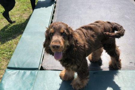 Four Legged Friends Petcare - dog on trampoline.jpg