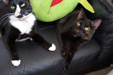 Four Legged Friends Petcare - cat on the sofa.jpg