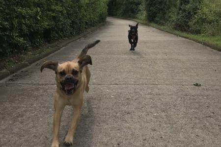 Four Legged Friends Petcare - 2 happy dogs running.jpg