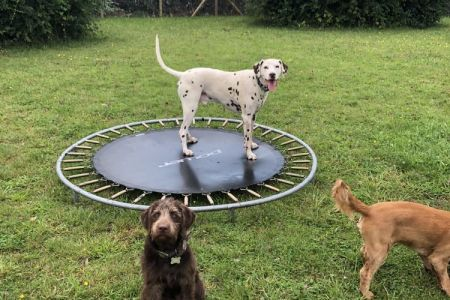 Four Legged Friends Petcare - dogs playing on trampoline.jpg