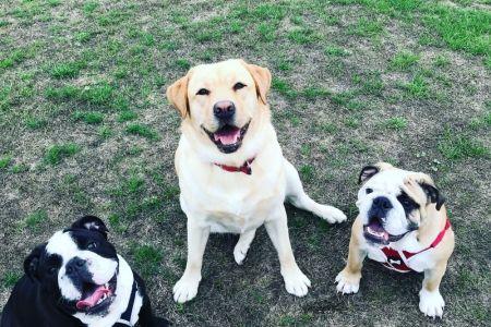 Four Legged Friends Petcare - 3 happy dogs.jpg