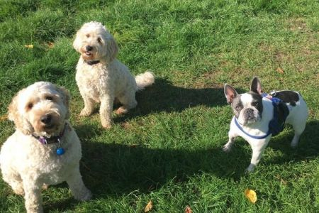Four Legged Friends Petcare - 3 small dogs in daycare.jpg