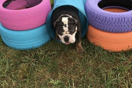 Four Legged Friends Petcare - dog in daycare tunnel.jpg