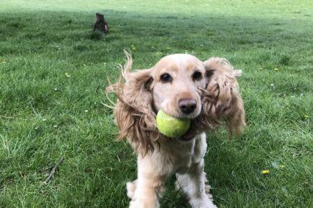 Four Legged Friends Petcare - happy running dog.jpg