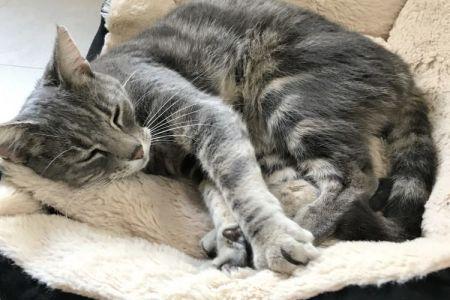 Four Legged Friends Petcare - grey cat sleeping.jpg
