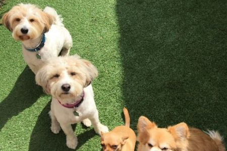 Four Legged Friends Petcare - 4 happy dogs in a row.jpg