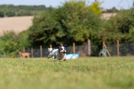Four Legged Friends Petcare - happy small black and white dog running.jpg