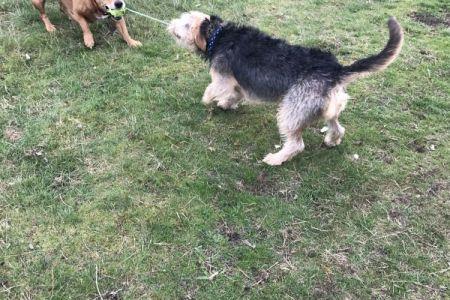 Four Legged Friends Petcare - 2 dogs tug of war.jpg