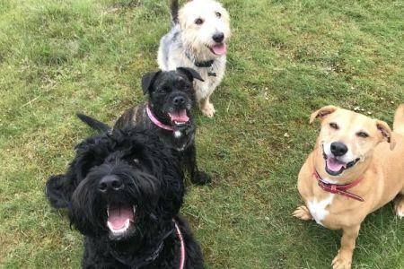 Four Legged Friends Petcare - 3 dogs on grass.jpg
