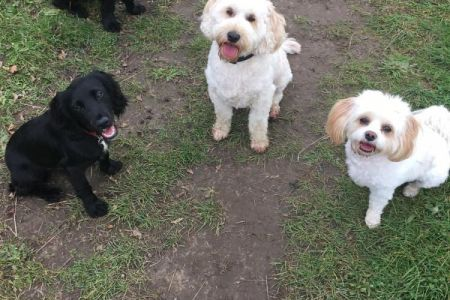 Four Legged Friends Petcare - 4 dogs on country path.jpg