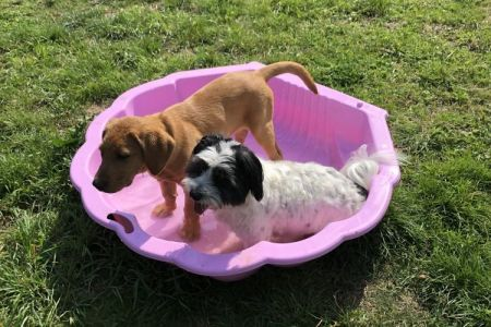 Four Legged Friends Petcare - dogs in paddling pool.jpg