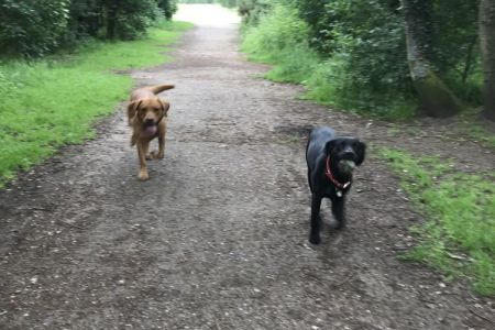 Four Legged Friends Petcare - two happy dogs on country walk.jpg