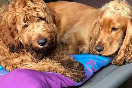 Four Legged Friends Petcare - two caramel coloured dogs.jpg