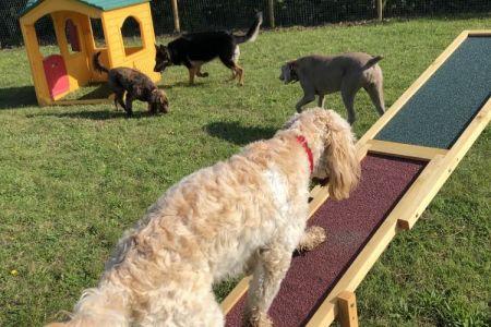Four Legged Friends Petcare - daycare dog running up ramp.jpg