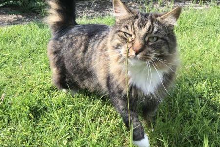 Four Legged Friends Petcare - fluffy cat in garden.jpg