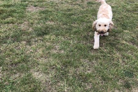 Four Legged Friends Petcare - dog running past paddling pool.jpg