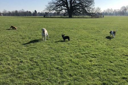 Four Legged Friends Petcare -  dogs running around a field.jpg