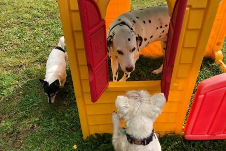 Four Legged Friends Petcare - dogs playing in playhouse.jpg