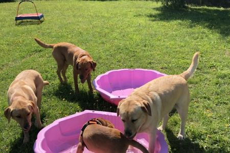 Four Legged Friends Petcare - big group of dogs in paddling pools.jpg
