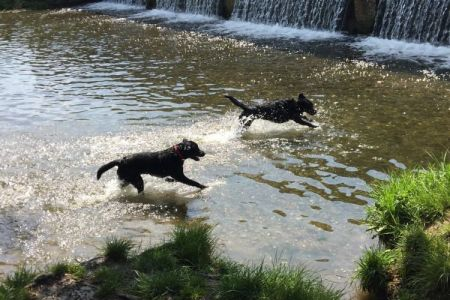 Four Legged Friends Petcare - 2 black dogs running in water.jpg
