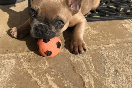 Four Legged Friends Petcare - cute dog playing with a ball.jpg