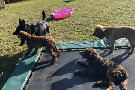 Four Legged Friends Petcare - happy dogs on a trampoline.jpg