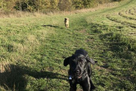 Four Legged Friends Petcare - dogs running through countryside.jpg