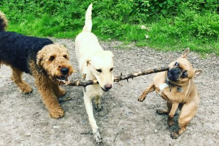 Four Legged Friends Petcare - 3 dogs with a big stick.jpg