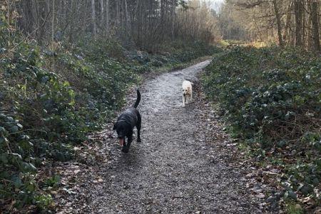 Four Legged Friends Petcare - dog on country walk on path.jpg