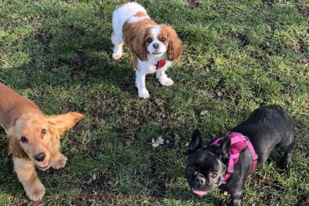 Four Legged Friends Petcare - 3 small dogs on grass.jpg